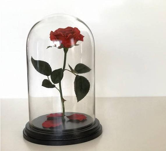 Descubre El Significado De Los Colores De Las Rosas Preservadas Y